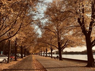 Maschsee-Promenade-im-Herbst